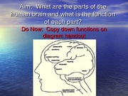 brain lesson parts and function