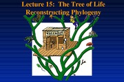 P10-Lecture 15-Speciation cont. Tree of Life- March 10