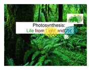 Photosynthesis_ppt