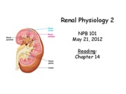 lecture34_Renal2_2012_POSTED