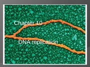 Lecture - DNA Replication