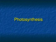CH 7---Photosynthesis