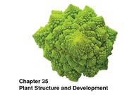 BIOL+172+9+Plant+Structure+and+Development