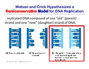 DNA_replication_updated_Nov_23
