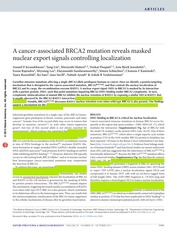 A cancer-associated BRCA2 mutation reveals masked nuclear export signals controlling localization -