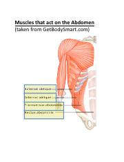 Human Muscles to Know.pdf