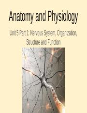 Unit 5 Part 1- Nervous System, Organization, Structure and Function-1.pptx