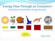 Food Chains, Food Webs and Energy Pyramids Notes 2012[1]