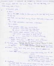 Notes - Blood, Vein systems