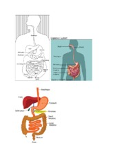 Digestive System Group project
