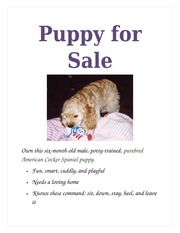 puppy for sale flyer templates lab 1 1 document storage at home medical history
