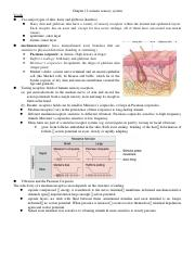 Chapter 12 somatic sensory system.docx