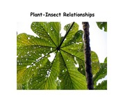 Lecture 7 - Plant-Insect Relationships