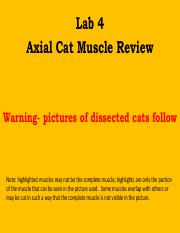 004  Axial muscle Review.pdf