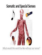 Somatic and Special Senses.pptx