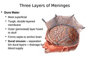Three Layers of Meninges