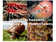 BIO 1500 Lecture 20 - Mollusks and nemerteans(1).ppt