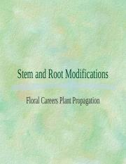 stem_and_root_modifications