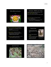 Lecture15-Edible-wild-mushrooms