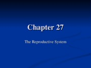 Ch%2027%20Male%20Reproduction%20Lecture%20Presentation%20Fall%2c%202011-1