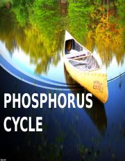 Phosphorus-Cycle-Report-PPT