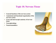 Topic 10 nervous tissue PRSENTATION 2009