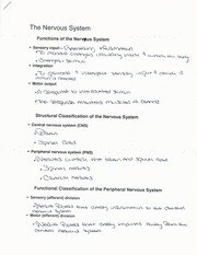 The Nervous System and Its Functions Notes