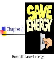 Chapter 8 - Cellular Respiration