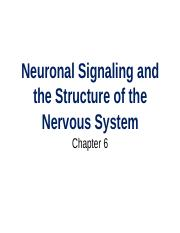 Chapter 6 - Neuronal Signaling and Nervous System Structure-2.pptx