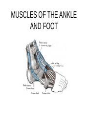 ankle_muscle.ppt