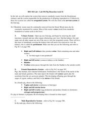 Lab 36 Study Guide PigUrogenital