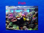 Fish_lecture_for_angel_3-1