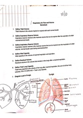 Respiratory Air Flow And Volume Worksheet