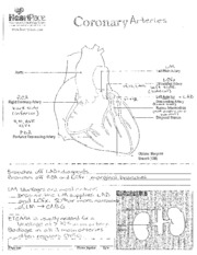 CORONARY ANATOMY