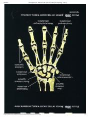 Hand ligaments - HKR-2311-081 (Intro to Anatomy & Physiology - 55113).pdf