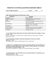 Nervous System and Senses Report Sheet.docx