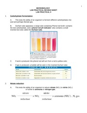 Lab Practical Review 2