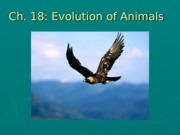 Chapter 18 Lecture Evolution of Animals