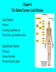 Ch. 06, The Skeletal System Axial Division, Revised (1).ppt