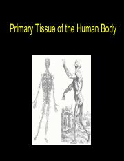 Lecture 2 Primary Tissue Types of the Human Body Fall 2014