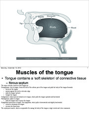 Muscles of the tongue