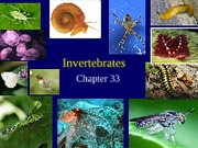 Lect8-InvertebratesPost