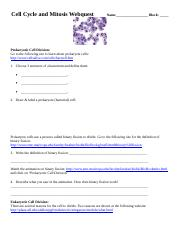 Cell Cycle And Mitosis Webquest Matthew Haile Cell Cycle