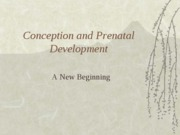 Conception++and+Prenatal+Development