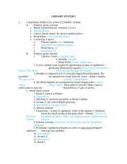 Anatomy 215 Urinary System 1 Notes