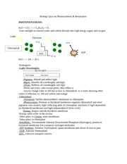 Biology Quiz on Photosynthesis and Respiration Review