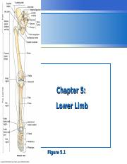 Lecture 13 - Leg & foot.ppt