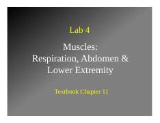 Lab4-MusclesPartII-NoLabels.pdf