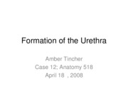 Formation of the Urethra