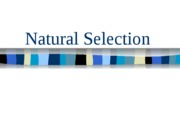 Natural_Selection